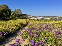 top of the bluff spring flowers